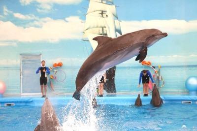 Dolphin Show regular Seat