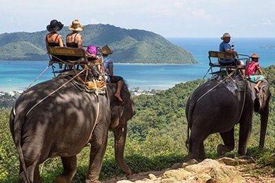 half day safari tour