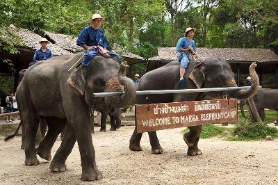 Half Day Maesa Elephant Tour Chiang Mai