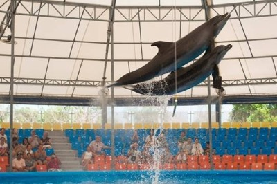Dolphin Show Deluxe Seat