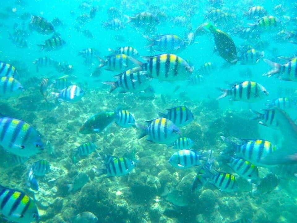 Phi Phi Island by Speed Boat Full Day Tour Snorkeling